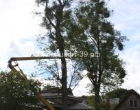Обрезка деревьев на ул. Спортивной
