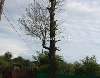 Спил дерева в Малиновке