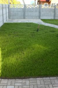Взошедший газон