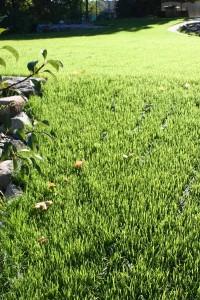 Устройство великолепных газонов